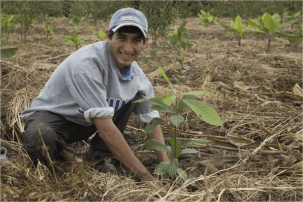 Original Beans Piura - Replanting Porcelana