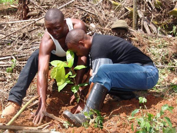 Original Beans Virunga - Replanting [2]