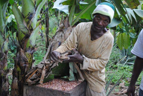 Original Beans Virunga - fermentation