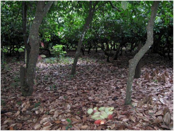 Morin Madagaskar [3]