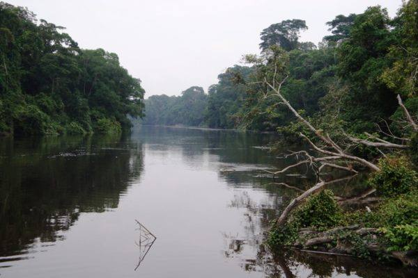 LAd5V River Dja - foto antoine penda -Commons Wikimedia