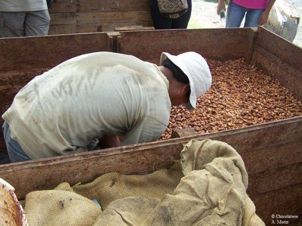 Morin-Peru-Chanchamayo - 1