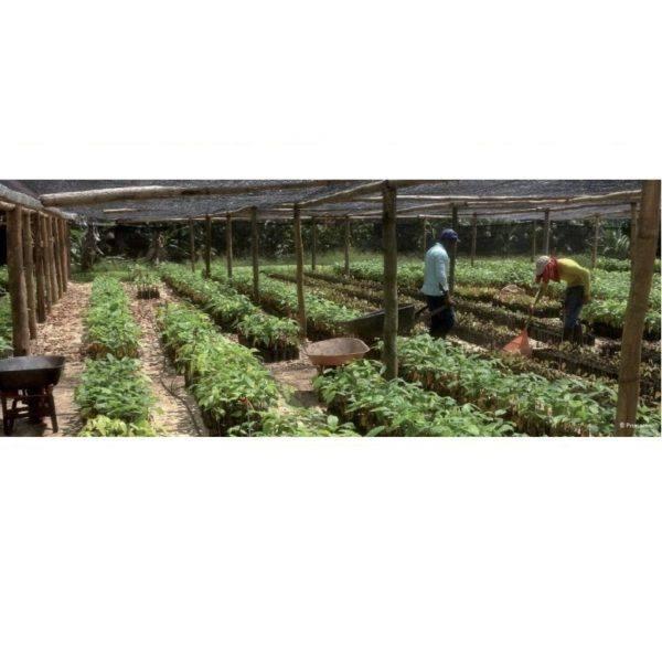Morin - dominican republic 63 - nursery