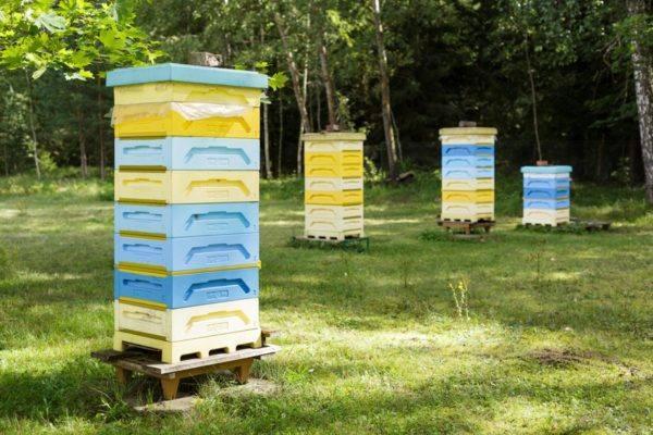 Naive - ambrosia - beehive