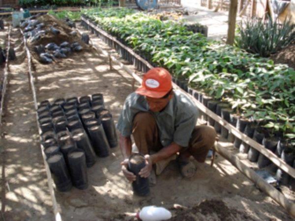 Original Beans Piura - nursery