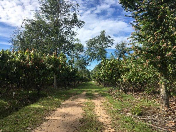 Tibito Meta 80 - Agua Clara Farm - Harvey Guiza 2
