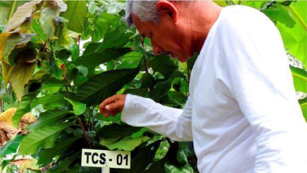 Tibito Tumaco 70 - farmer